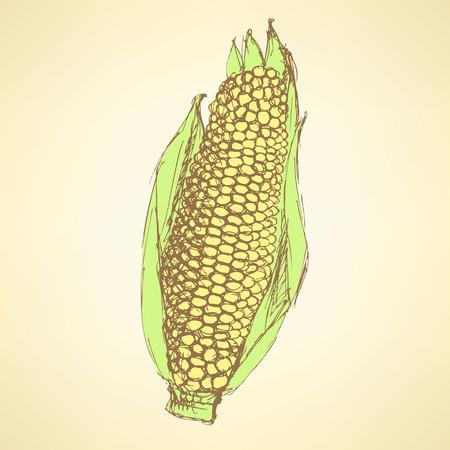 corn on the cob: Sketch corn cob in vintage style, vector
