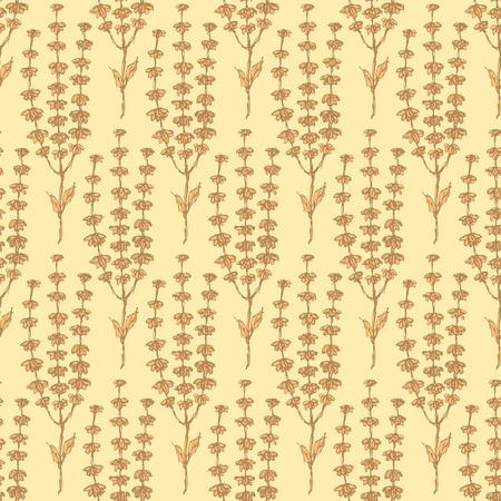 basil herb: Hierbas de albahaca Bosquejo en el estilo vintage, vector sin fisuras patr�n Vectores