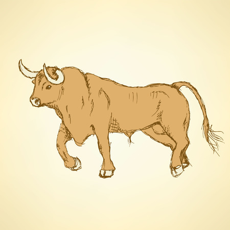 angry bull: Sketch angry bull in vintage style, vector