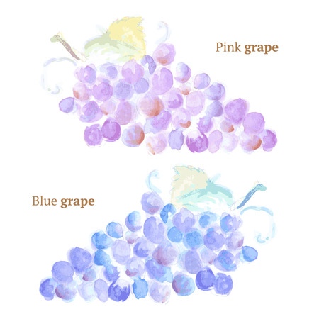 Watercolor grape with leaves in vintage style, vector