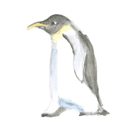 pinguin: Watercolor cute pinguine in vintage style, vector