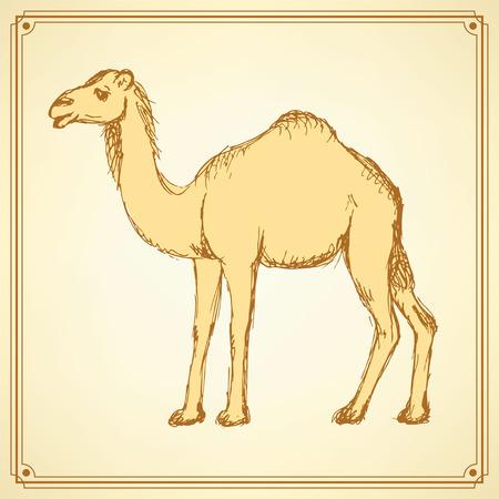 camello: Camello lindo Bosquejo en el estilo vintage, vector Vectores