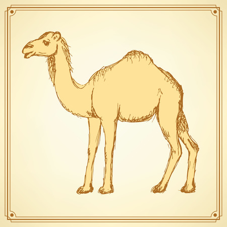 camel silhouette: Sketch cute camel in vintage style, vector