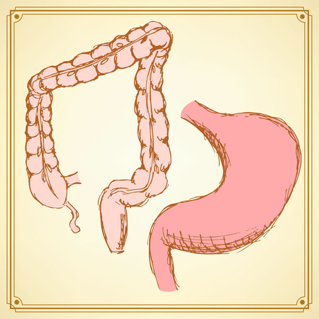 rectum: Sketch stomach and rectum  in vintage style, vector