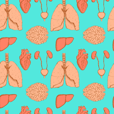 physiology: Sketch internal organs in vintage style, vector seamless pattern Illustration