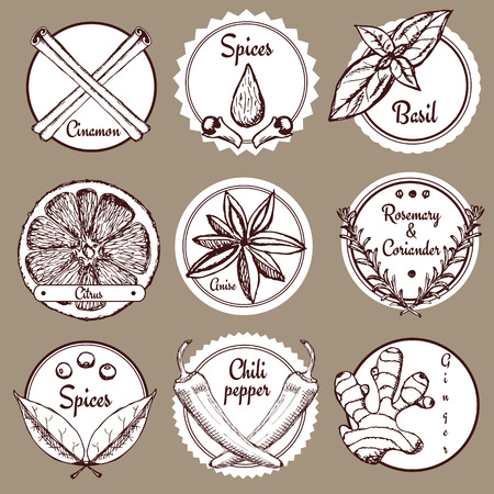 logotypes: Sketch spices logotypes in vintage style, vector Illustration