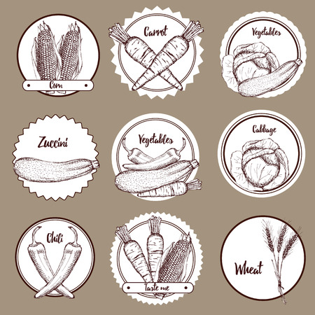 barrel tile: Sketch set of vegetable in vintage style Illustration