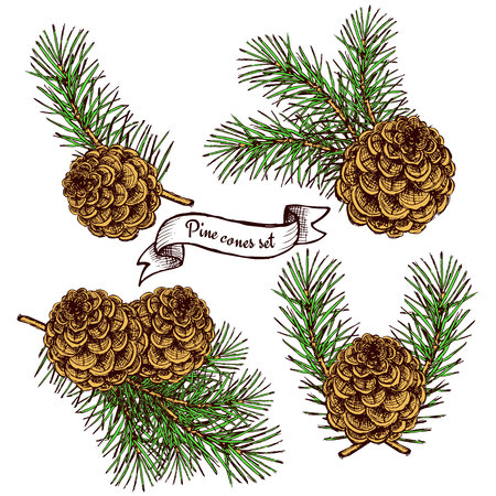 Pine cone set with robbon in vintage style, background Illustration