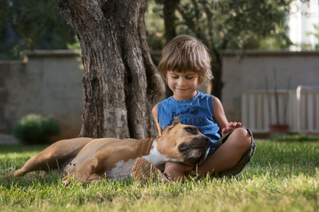 ittle: Cute ittle boy cuddling american staffordshire terrier lying in boys lap.