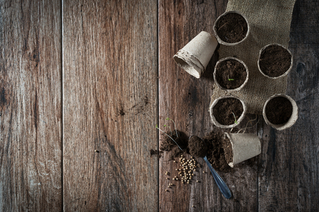 Growing potted plants from seeds in biodegradable peat pots on rustic wooden background. Homegrown food, vegatables, sustainable household concept. Spring is here concept. Somen negative space.