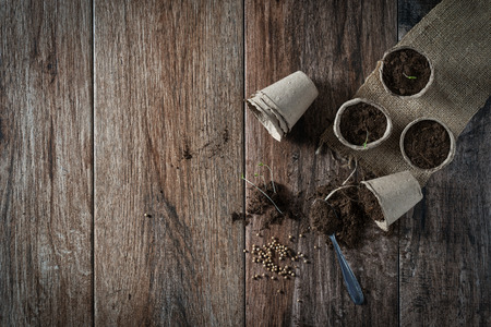 Growing potted plants from seeds in biodegradable peat pots on rustic wooden background. Homegrown food, vegatables, self-sufficien home, sustainable household concept. Spring is here concept. Somen negative space. 스톡 콘텐츠