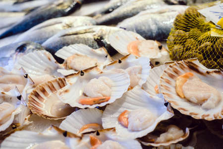 Fresh scallops on fish market, CClams, Shellfish, Jacob's mussels
