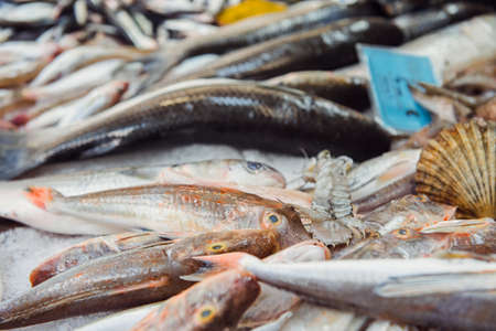 Close up of fresh fish on seafood market, croatia 스톡 콘텐츠
