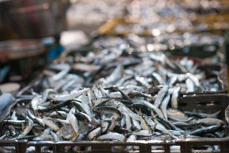 Freshly caught sardines on seafood market.