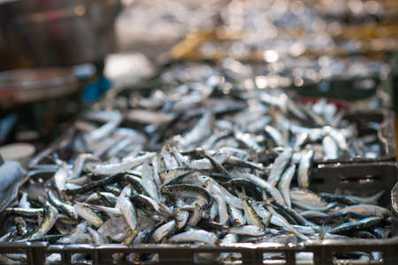 Freshly caught sardines on seafood market.