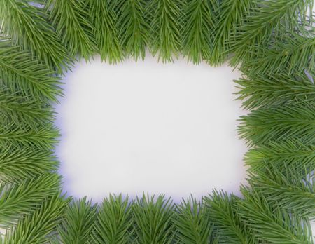 Fresh green fir branches isolated on white background photo