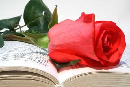 date book: red rose on a book