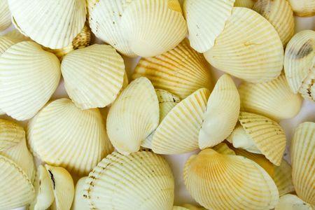 mach: mach seashel on the whute backgroundsl
