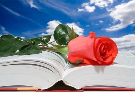 red rose on a book photo