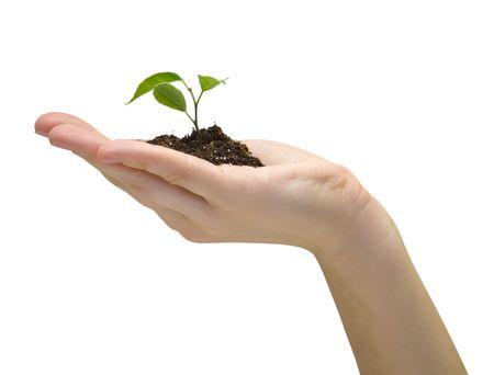 replant:  Pianta in una mano isolata on white background