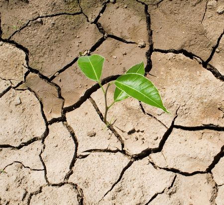 rainless: Cracked, parched land after a drought