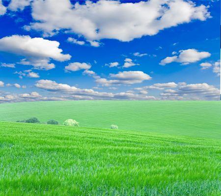 mach:  Vhery mach green grass under blue sky
