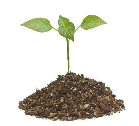 Young plant on the white backgrounds Stock Photo - 6677798
