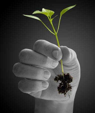 contaminacion del medio ambiente: wooman sosteniendo una planta entre manos sobre blanco  Foto de archivo