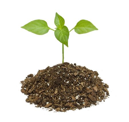 Young plant on the white backgrounds . Stock Photo - 6677822
