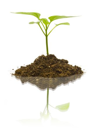 Young plant on the white backgrounds Stock Photo - 6856348