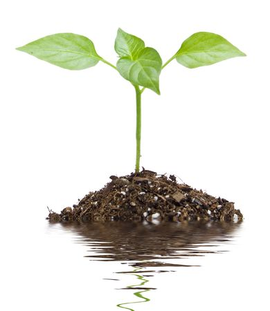 a young green plant in black soil Stock Photo - 6856289