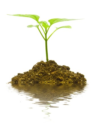 Young plant on the white backgrounds Stock Photo - 7318531
