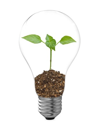 welfare plant: bulb on a white background Stock Photo