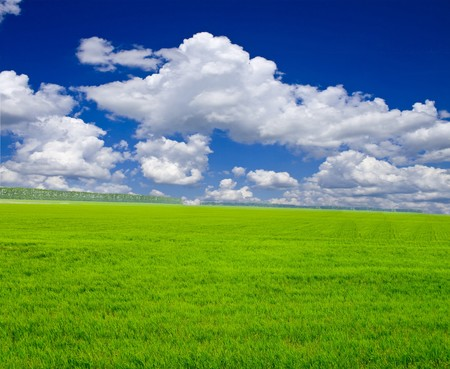 a lot of green wheat under blue sky Stock Photo - 7511203