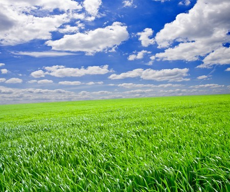 Green grass under blue sky Stock Photo - 7511221