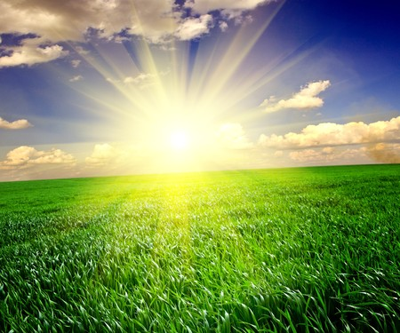 Green grass under blue sky Stock Photo - 7511237