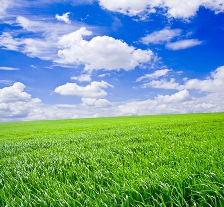Green grass under blue sky Stock Photo - 7530966