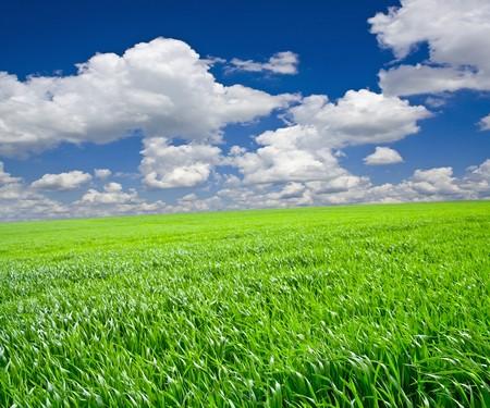 Green grass under blue sky Stock Photo - 7564323
