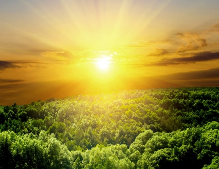 shine: sunlight in trees of green summer forest Stock Photo