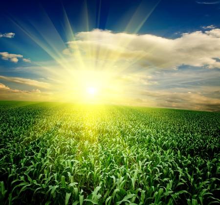 Green grass under blue sky Stock Photo - 7897357