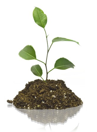 Young plant on the white backgrounds Stock Photo - 8163422
