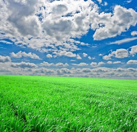 Green grass under blue sky Stok Fotoğraf