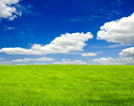 a lot of green wheat under blue sky Stock Photo - 8214354