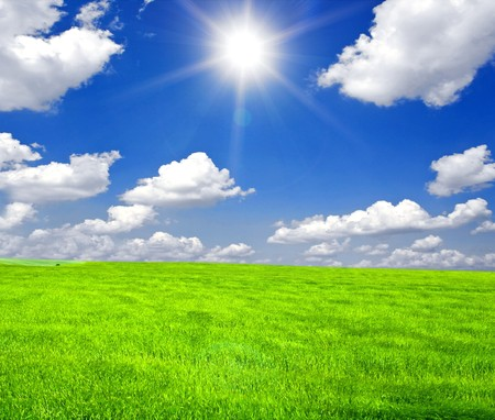 a lot of green wheat under blue sky Stock Photo - 8214346