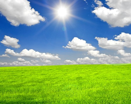 a lot of green wheat under blue sky Stock Photo - 8214349