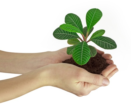 Plant in a hand isolated on white background photo