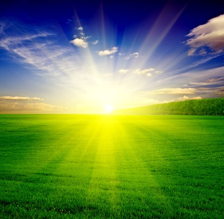 Green grass under blue sky Stock Photo - 9856256