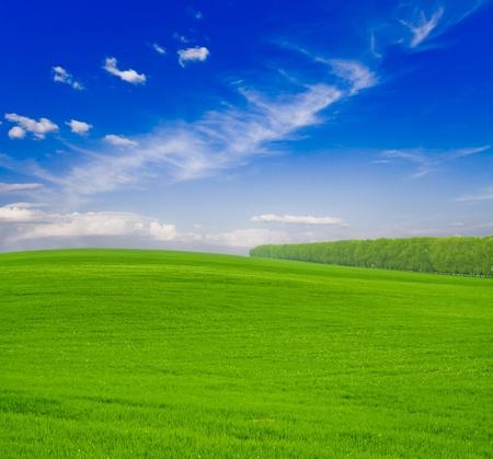 Green grass under blue sky Stock Photo - 10502157