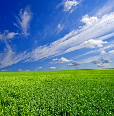 sun shine: beautiful sunny landscape with field and forest Stock Photo