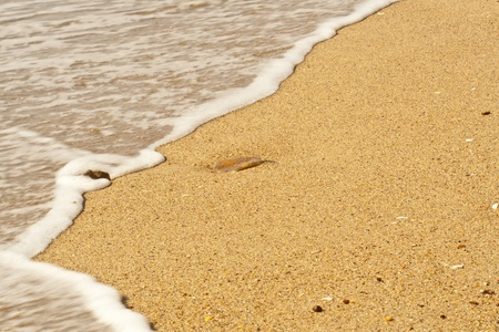 gulf: blue sky over the sea beach Stock Photo